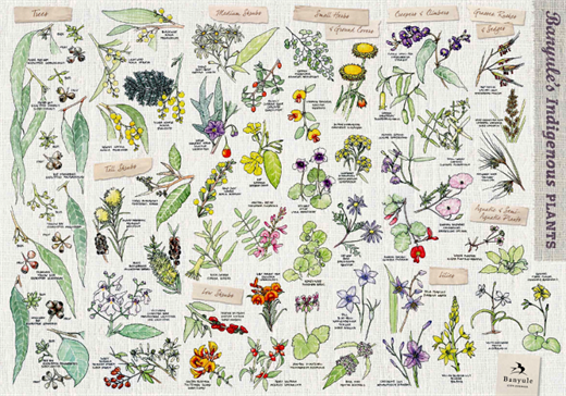 Banyule's native flora poster